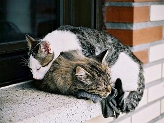 photo-chatons