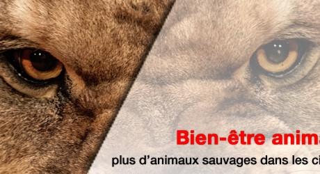 animaux_cirque_banner